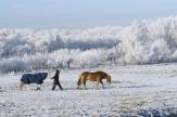 wintermetpaarden2079