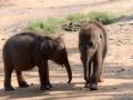 306_ROB9259 jonge olifantjes46x31